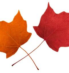 1920x1280 free leaf clipart 4793652 [ 1920 x 1280 Pixel ]