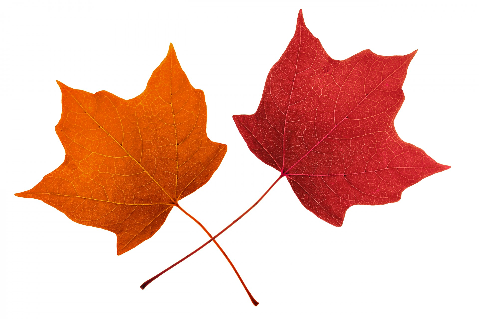 hight resolution of 1920x1280 free leaf clipart 4793652