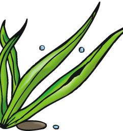 1200x793 seaweed clipart seagrass 3889710 [ 1200 x 793 Pixel ]