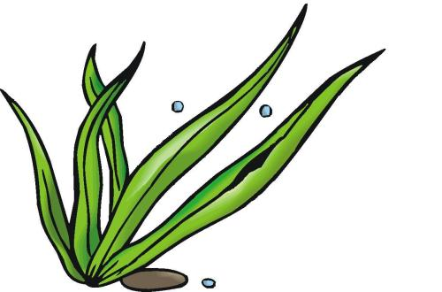 small resolution of 1200x793 seaweed clipart seagrass 3889710