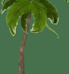 2497x4000 astonishing clipart palm tree png image graphics moana [ 2497 x 4000 Pixel ]