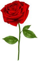rose clipart flower getdrawings