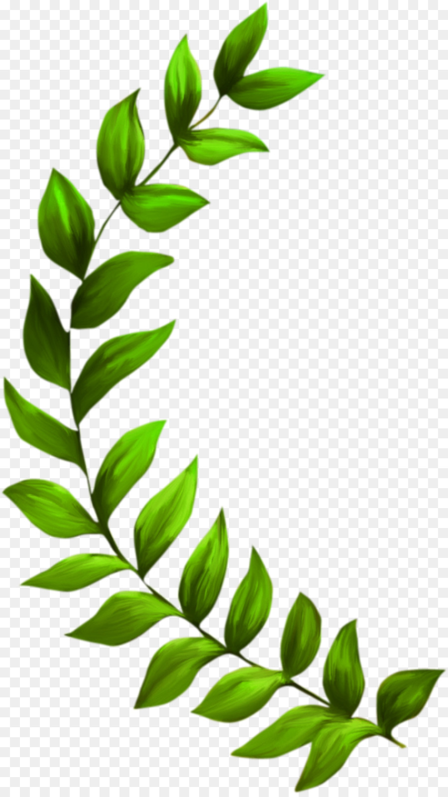 hight resolution of 900x1600 seagrass plant seaweed clip art