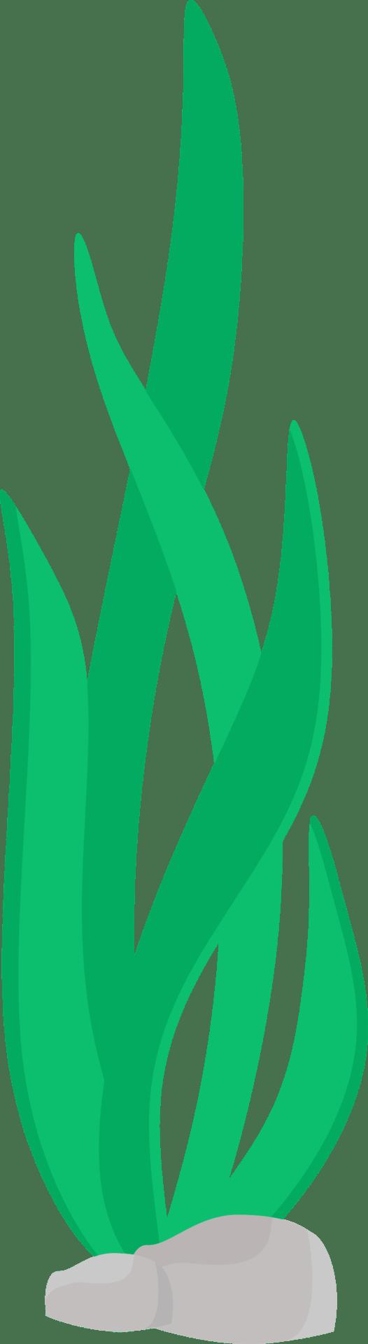 medium resolution of 526x1920 seaweed beachy dreams seaweed