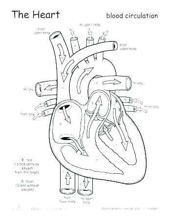 Anatomy And Physiology Coloring Pages at GetDrawings