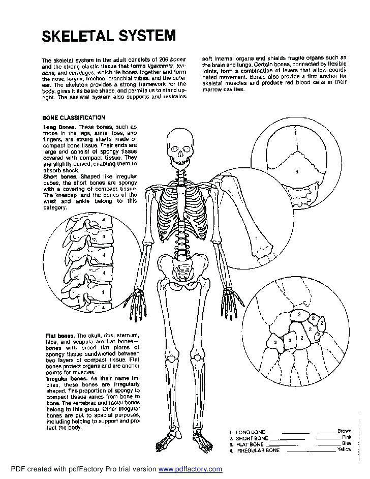 Human Anatomy Coloring Book.pdf : human, anatomy, coloring, book.pdf, Anatomy, Physiology, Coloring, Printable, Pages