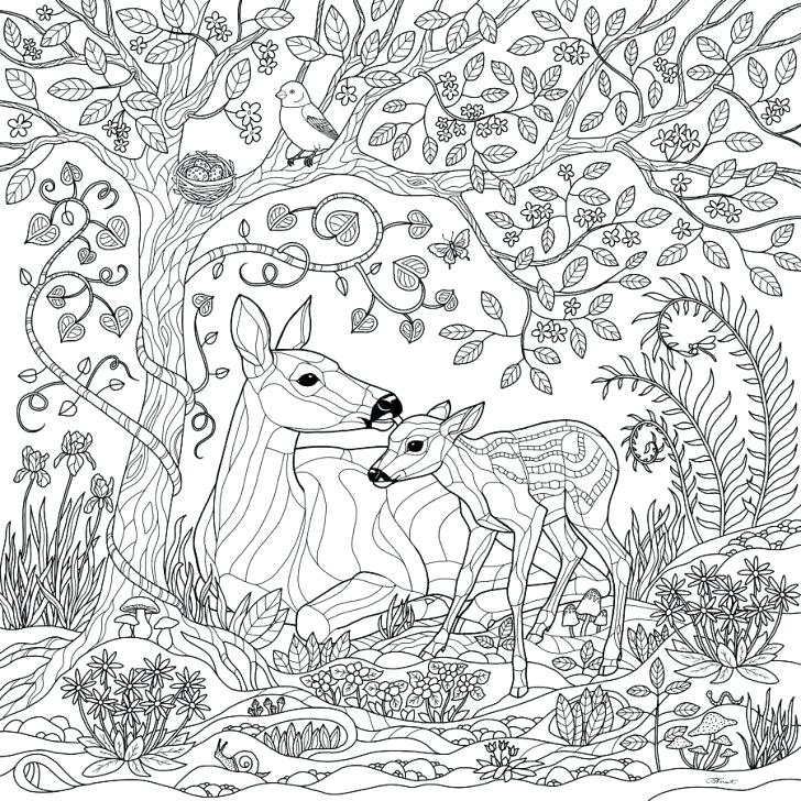 enchanted forest coloring pages at getdrawings  free download