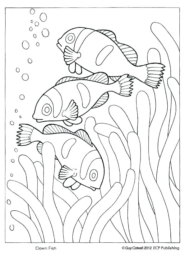 national geographic coloring pages # 24