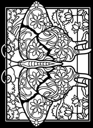 butterfly coloring pages adult getdrawings colorings drawing