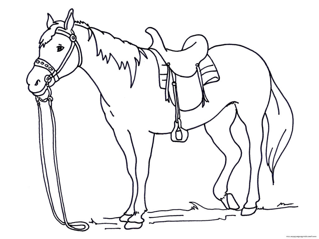 Horse Coloring Pages For Kids At Getdrawings
