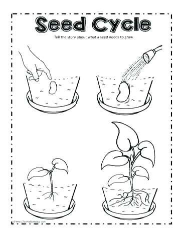 The best free Plant coloring page images. Download from