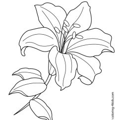 Lily Diagram Printable 2 Way Switch Wiring Pdf Flower Coloring Pages At Getdrawings Com Free For Personal 736x875 Pe Google De Embroidery