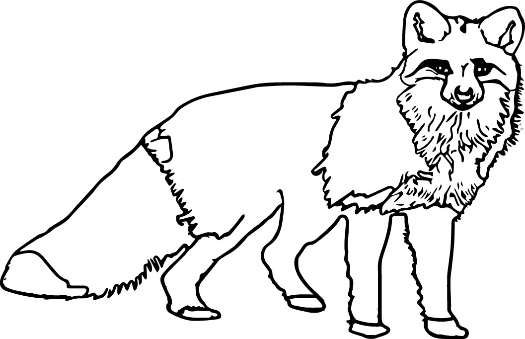 The best free Nocturnal coloring page images. Download