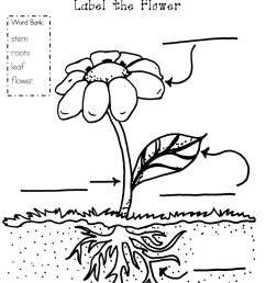 1264x1600 plant coloring pages parts of a ribsvigyapan bean plant plant parts of a plant coloring page at getdrawings free for [ 1264 x 1600 Pixel ]