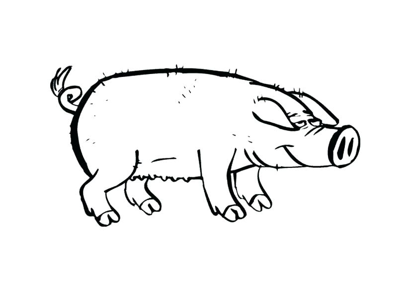 pig coloring pages for adults at getdrawings  free download