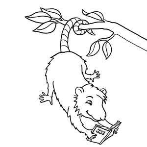 The best free Possum coloring page images. Download from