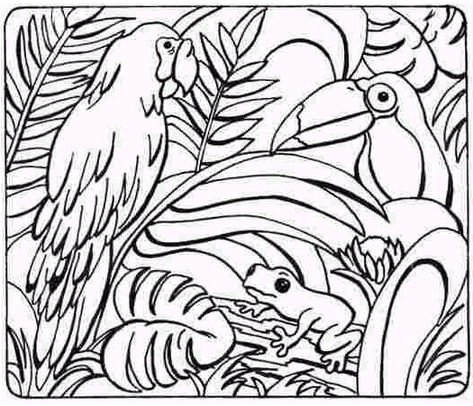 rainforest coloring page # 47