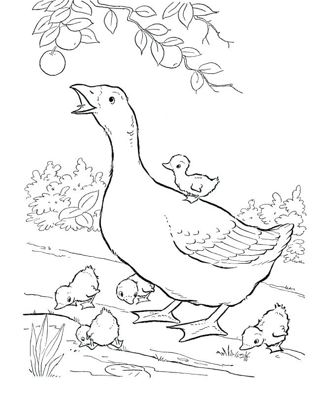Realistic Animal Coloring Pages : realistic, animal, coloring, pages, Realistic, Animal, Coloring, Pages, GetDrawings, Download