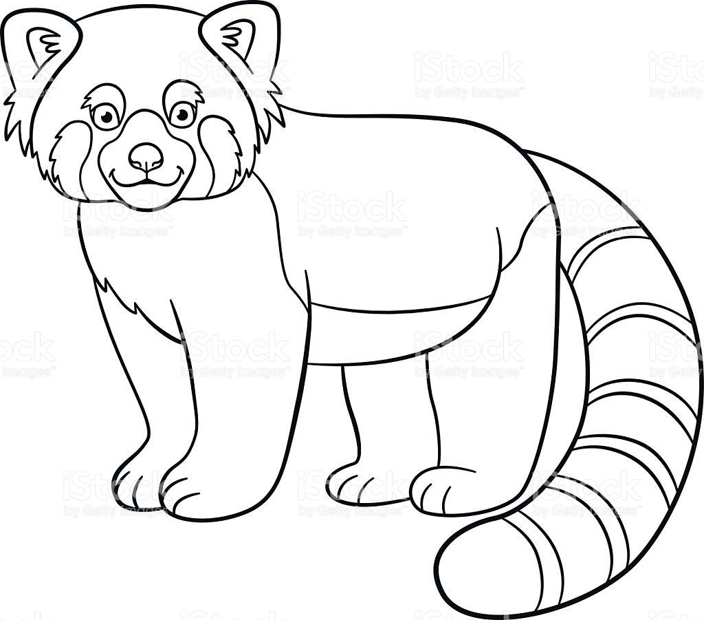 Red Panda Coloring Page at GetDrawings Free download