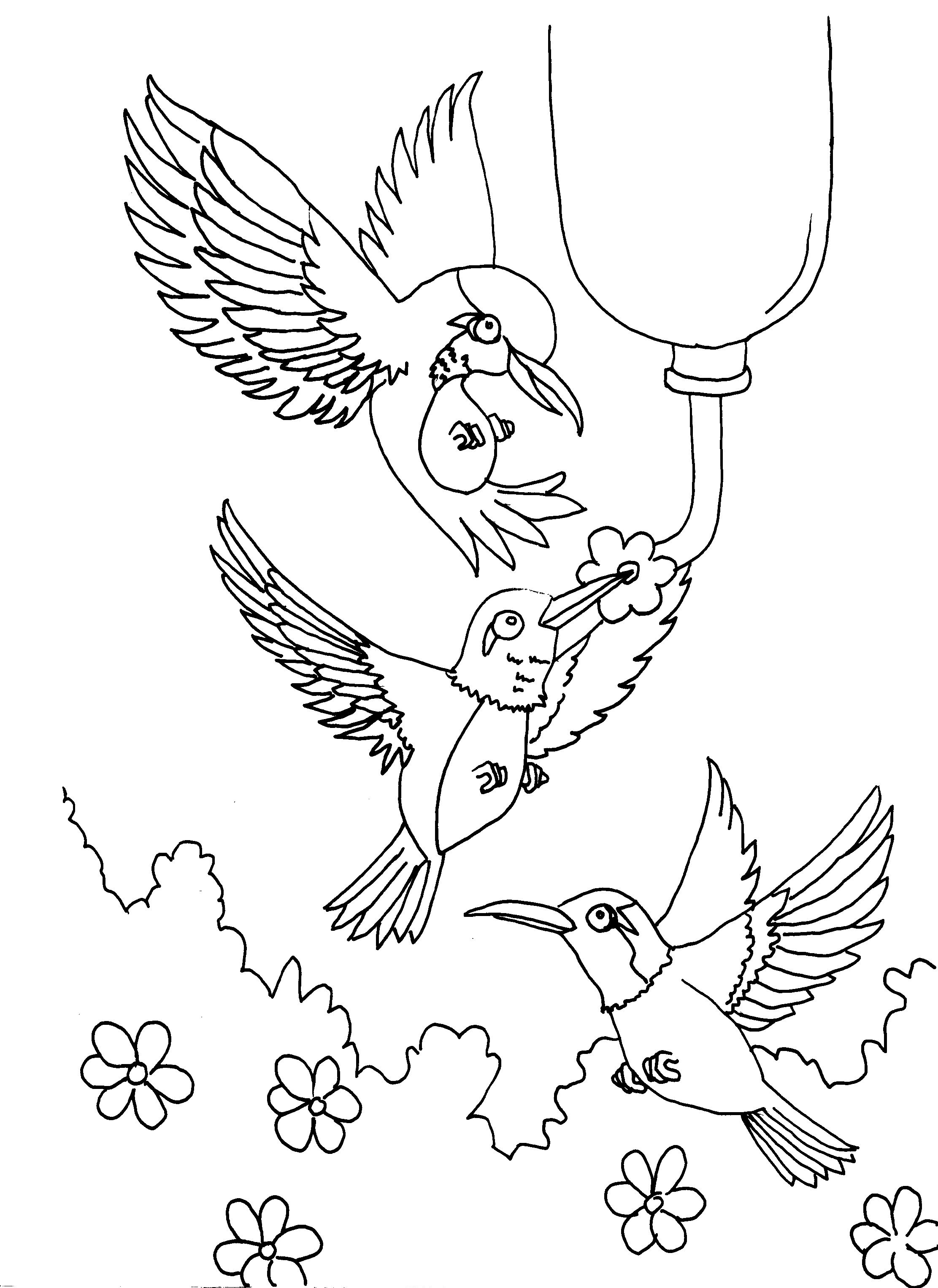 Ruby Throated Hummingbird Coloring Pages At Getdrawings
