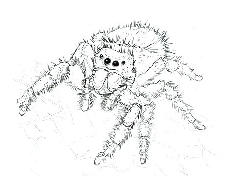 thesebemypics: Anansi The Spider Coloring Pages
