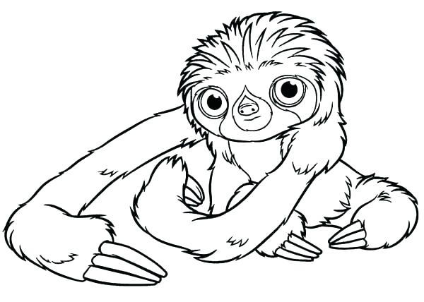Three Toed Sloth Coloring Pages At Getdrawings Free Download