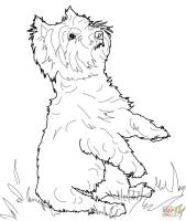 Yorkie Dog Coloring Pages at GetDrawings   Free download