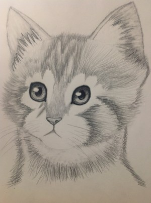 pencil drawing animal animals drawings simple kitten cartoon sketches easy artdrawing coloring drawn draw getdrawings deviantart paintingvalley yahoo