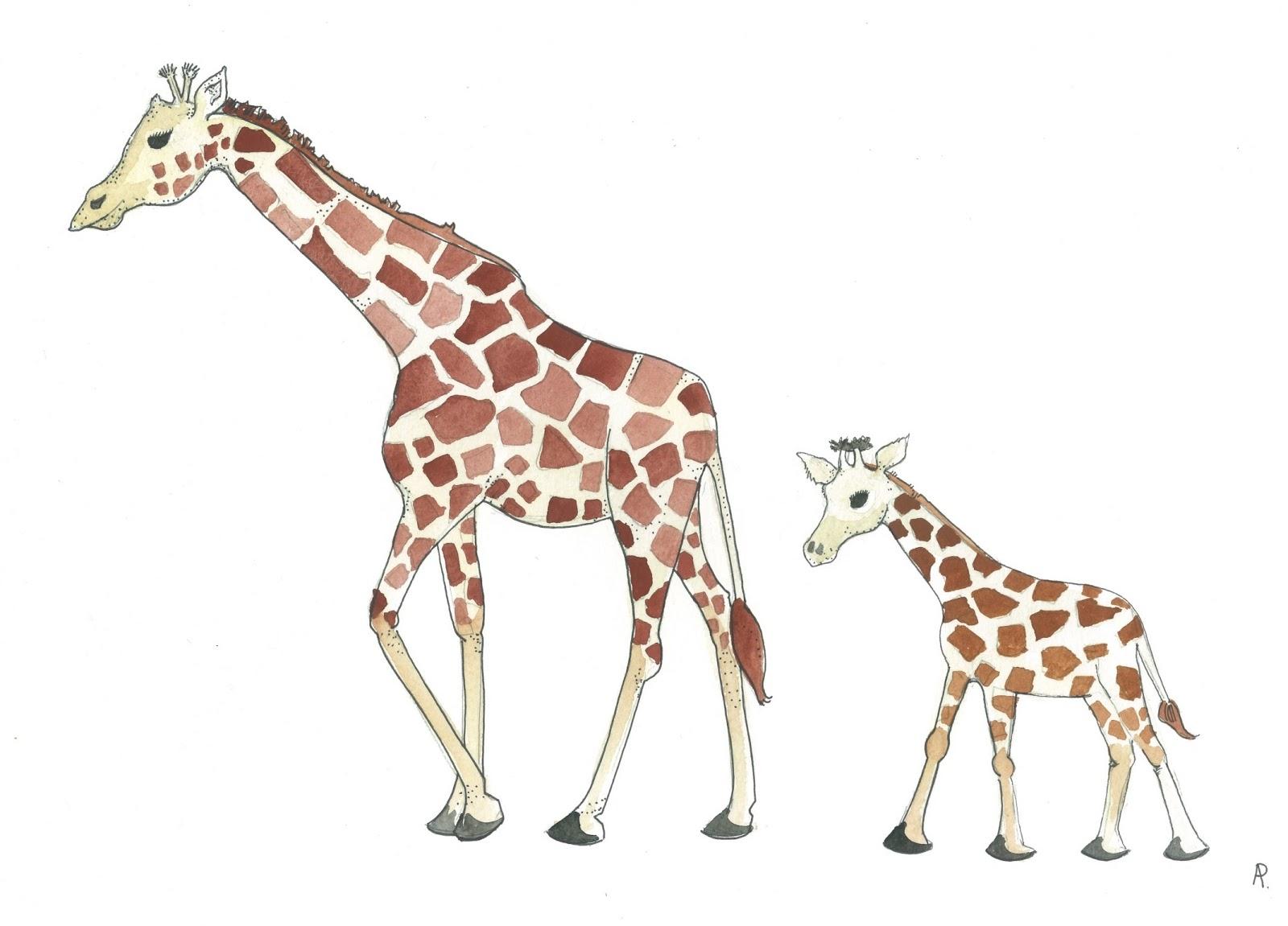 Baby Giraffe Drawing At Getdrawings
