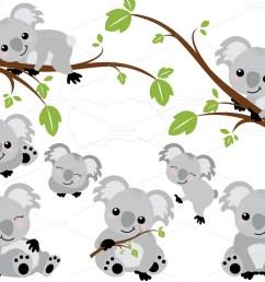 1160x772 koalas koalas bears animal and baby animals [ 1160 x 772 Pixel ]
