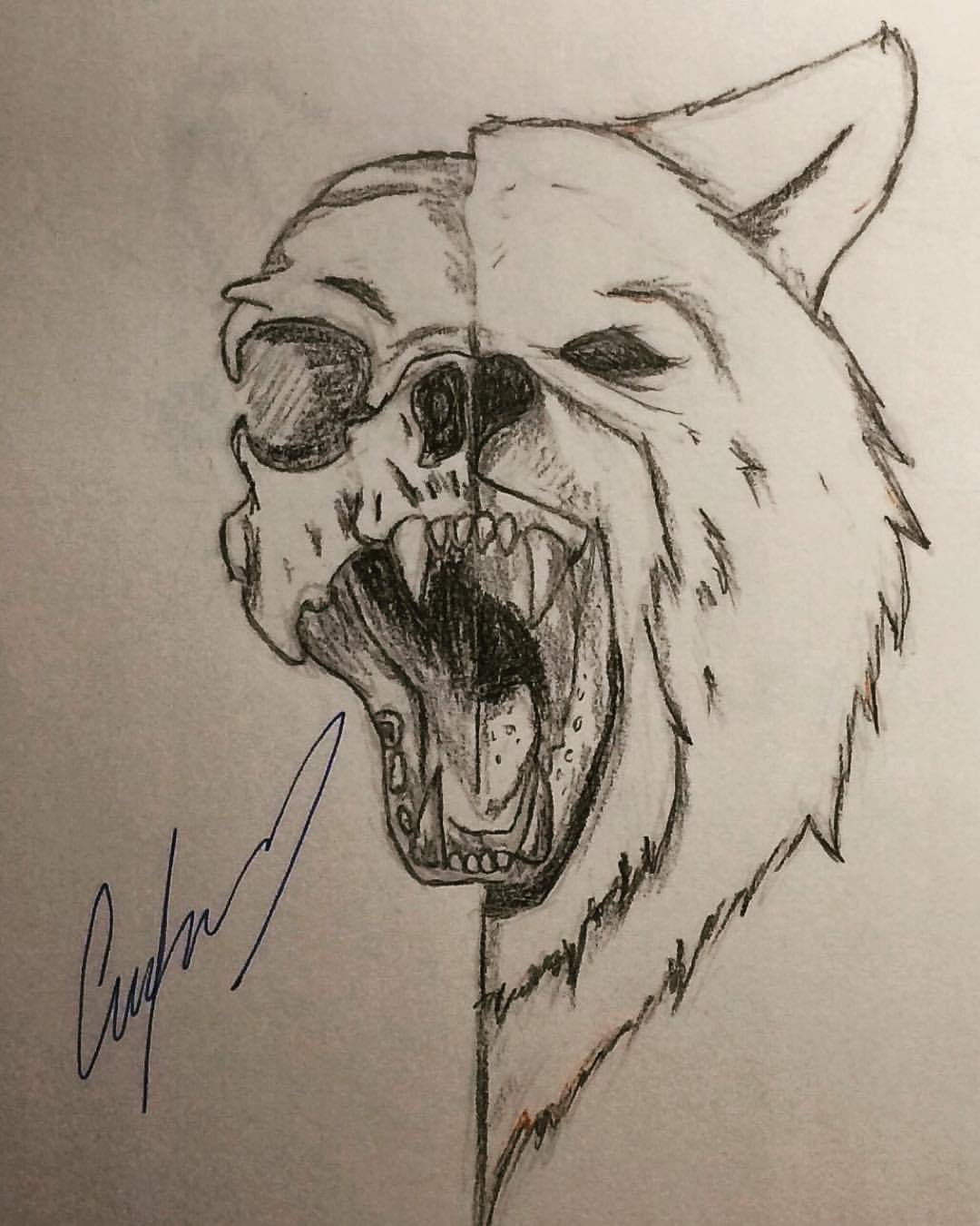 bear skull diagram poe ethernet wiring drawing at getdrawings free for personal