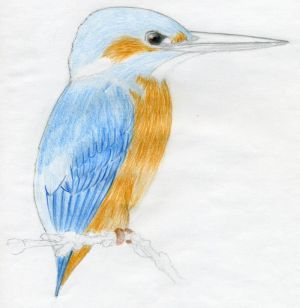 bird draw easy simple drawing drawings step sketches animal realistic sketch kingfisher quick birds pencil feathers steps feather getdrawings natural