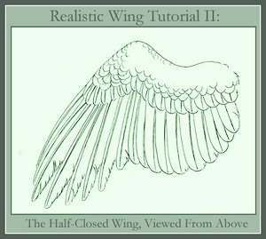 eagle wing diagram server rack wiring bird drawing at getdrawings com free for personal use 300x269 realistic tutorial ii by windfalcon