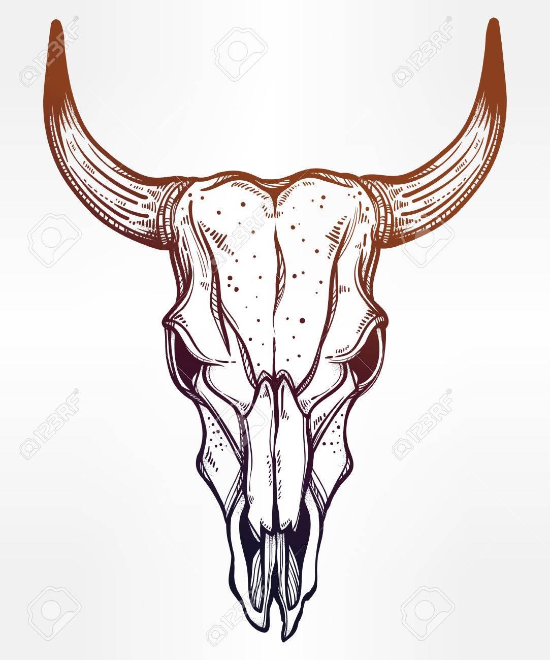 Bull Skull Clipart : skull, clipart, Cattle, Skull, Drawing, GetDrawings, Download