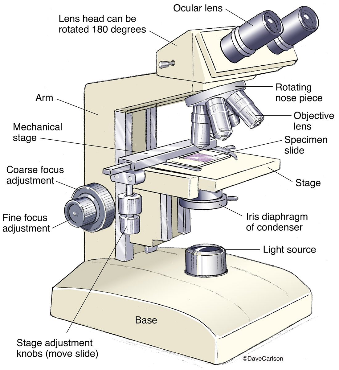 diagram of a microscope and functions its parts tropical rainforest soil compound light drawing at getdrawings