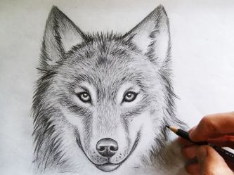 wolf drawing drawings cool face head draw wolves sketch pencil animal step tattoo sketches wolfs quotes awesome amazing animals rabbit
