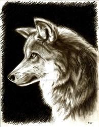 wolf pencil mexican drawing cool spectrum vii drawings deviantart getdrawings sly fox gaze