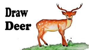 deer easy draw step drawing getdrawings
