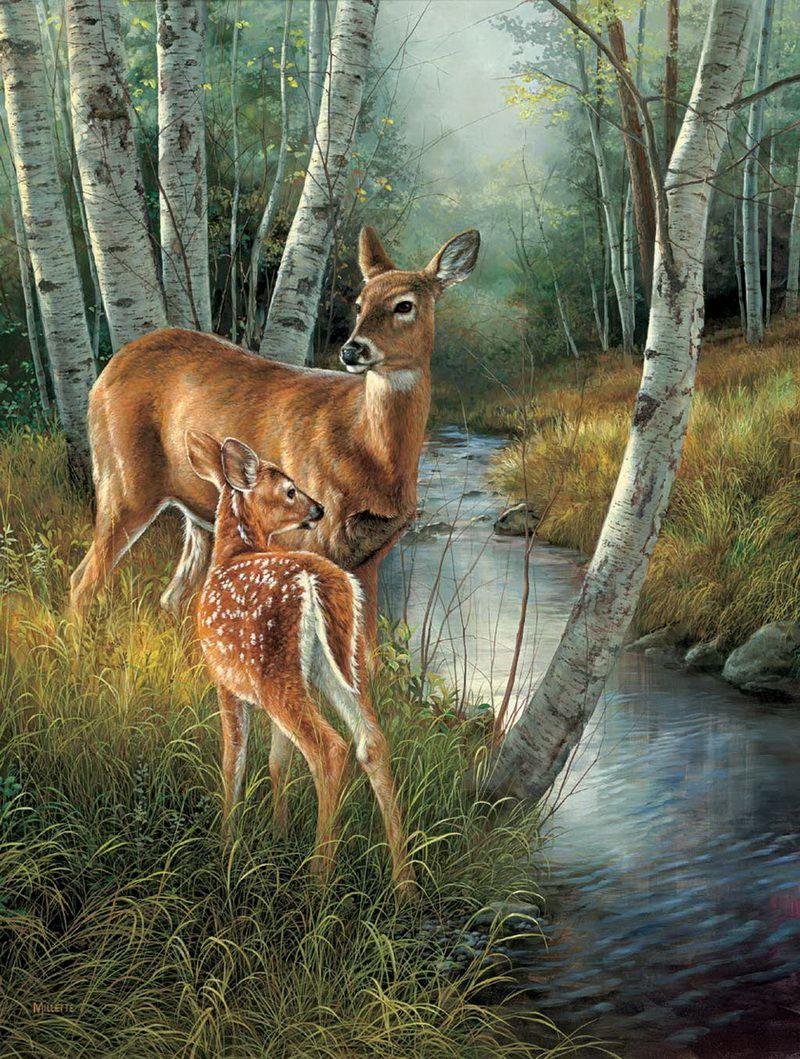 Deer Drinking Water Drawing : drinking, water, drawing, Drinking, Water, Drawing, GetDrawings, Download