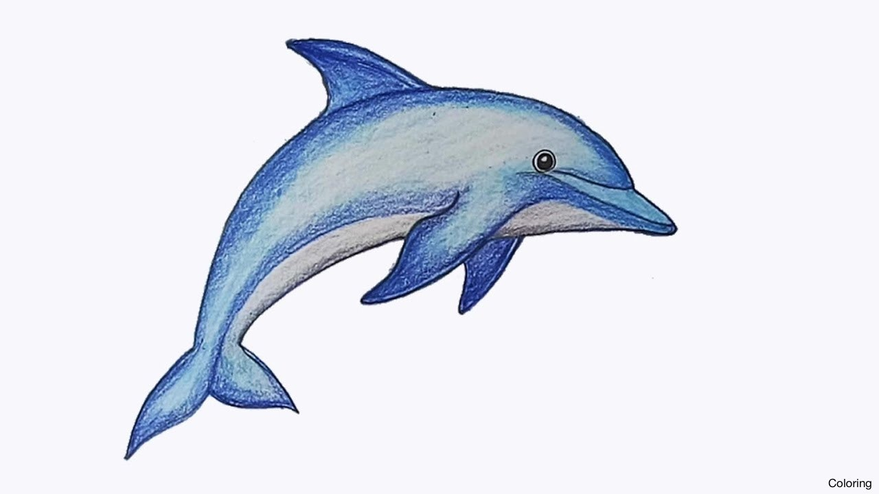 And Dolphins Animals Cartoon Cute Drawn