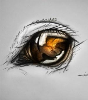 eye drawing drawings template easy horse eyes pencil templates getdrawings printable psd