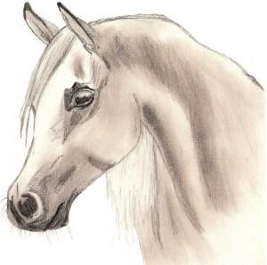 easy horse drawing drawings horses draw getdrawings