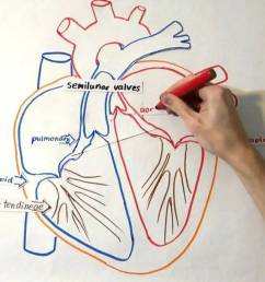 1280x720 the heart structure and function [ 1280 x 720 Pixel ]