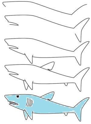 easy shark drawing step drawings simple getdrawings
