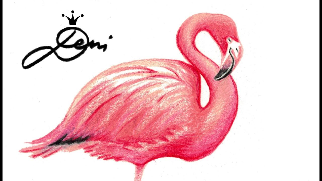 flamingo drawing at getdrawings