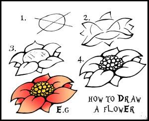 draw flower flowers simple step easy drawing drawings steps rose beginners guide beginner daryl hobson artwork getdrawings paintingvalley drawingartpedia fruit