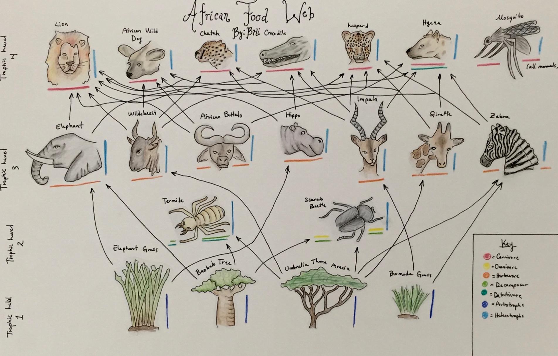 Food Web Drawing At Getdrawings