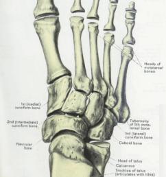 1012x1752 anatomy amp physiology illustration egeszseg megorzo [ 1012 x 1752 Pixel ]