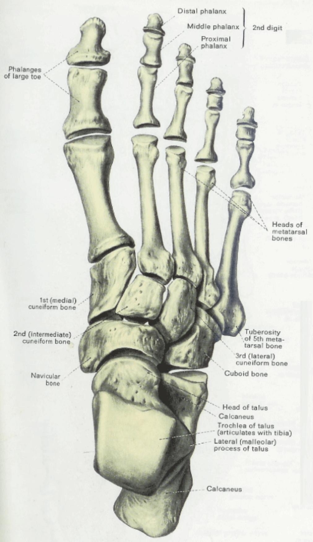 hight resolution of 1012x1752 anatomy amp physiology illustration egeszseg megorzo