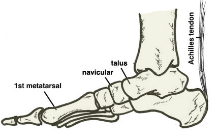 joints of the foot diagram 3 way switch connection skeleton drawing at getdrawings com free for personal use 429x269 yoga healthy feet amp knees part 2